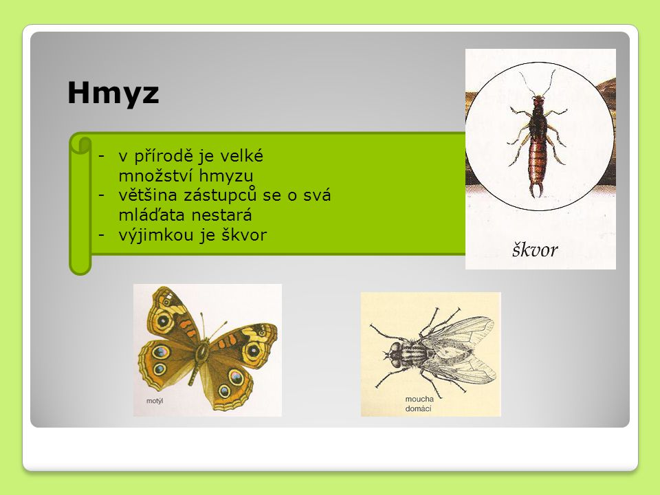 Hmyz -v přírodě je velké množství hmyzu -většina zástupců se o svá mláďata nestará -výjimkou je škvor