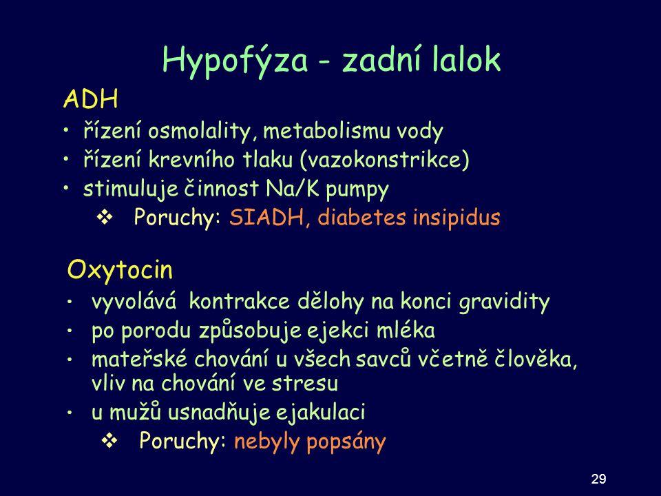 Hypofýza - zadní lalok Oxytocin vyvolává kontrakce dělohy na konci gravidity po porodu způsobuje ejekci mléka mateřské chování u všech savců včetně čl