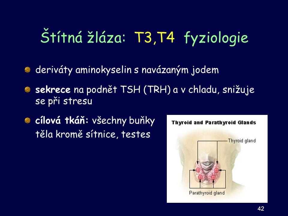 Štítná žláza: T3,T4 fyziologie deriváty aminokyselin s navázaným jodem sekrece na podnět TSH (TRH) a v chladu, snižuje se při stresu cílová tkáň: všec
