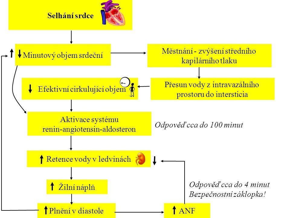 Přesun vody z intravazálního prostoru do intersticia Městnání - zvýšení středního kapilárního tlaku Aktivace systému renin-angiotensin-aldosteron Rete