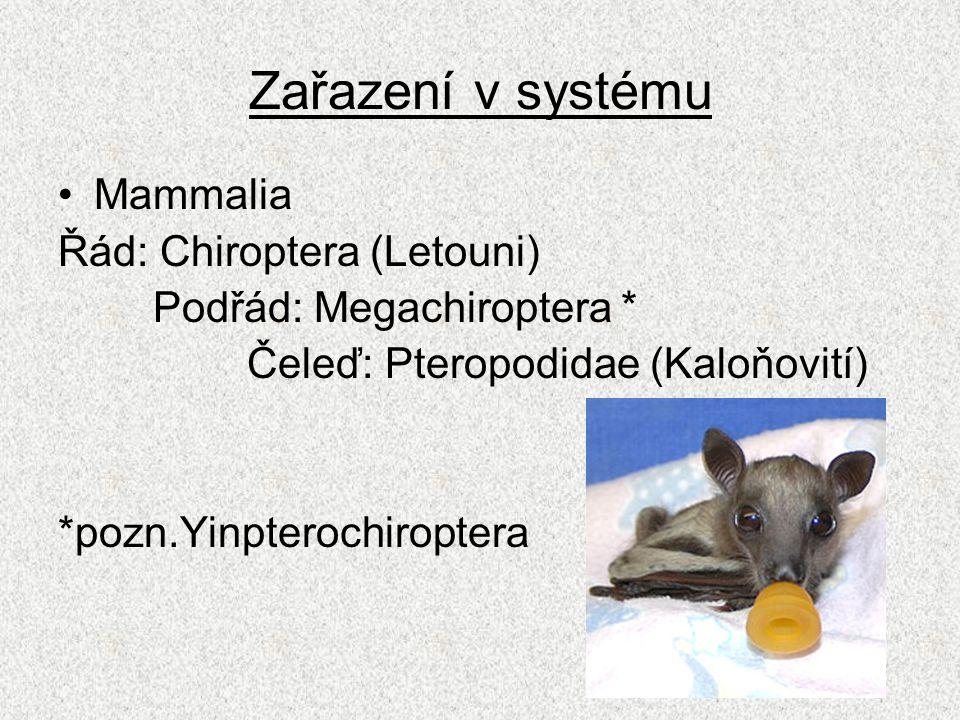 Zařazení v systému Mammalia Řád: Chiroptera (Letouni) Podřád: Megachiroptera * Čeleď: Pteropodidae (Kaloňovití) *pozn.Yinpterochiroptera