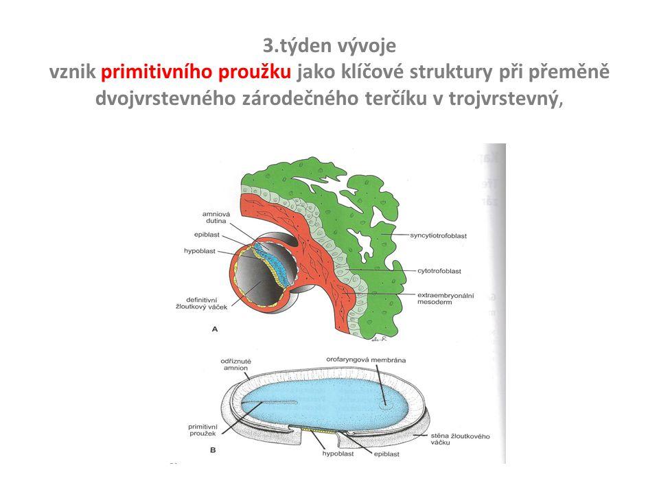 3.týden vývoje vznik primitivního proužku jako klíčové struktury při přeměně dvojvrstevného zárodečného terčíku v trojvrstevný,