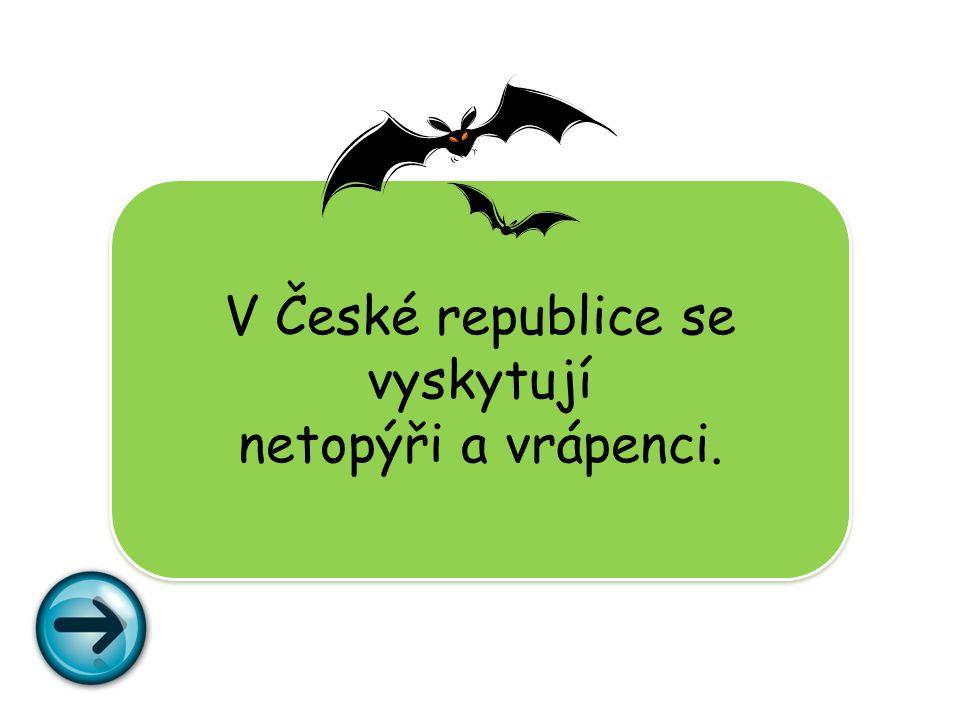 V České republice se vyskytují netopýři a vrápenci.