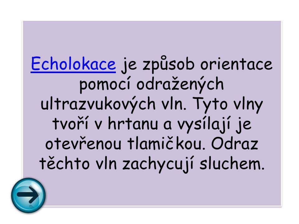 EcholokaceEcholokace je způsob orientace pomocí odražených ultrazvukových vln.