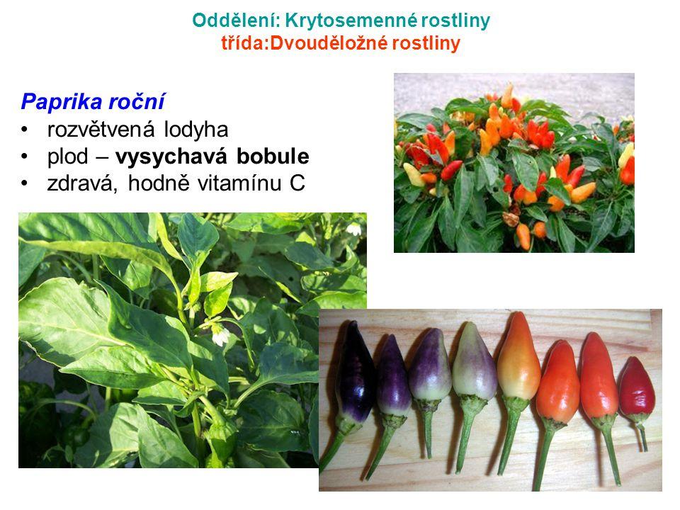 Oddělení: Krytosemenné rostliny třída:Dvouděložné rostliny Paprika roční rozvětvená lodyha plod – vysychavá bobule zdravá, hodně vitamínu C