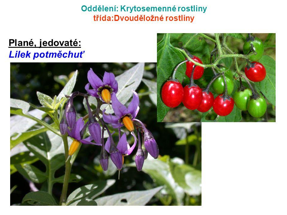 Oddělení: Krytosemenné rostliny třída:Dvouděložné rostliny Plané, jedovaté: Lilek potměchuť