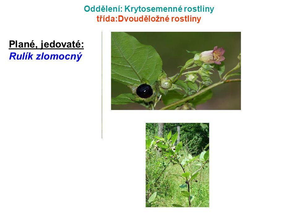 Oddělení: Krytosemenné rostliny třída:Dvouděložné rostliny Plané, jedovaté: Rulík zlomocný