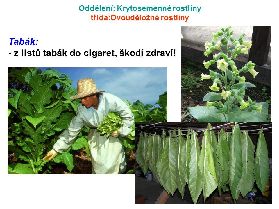 Oddělení: Krytosemenné rostliny třída:Dvouděložné rostliny Tabák: - z listů tabák do cigaret, škodí zdraví!