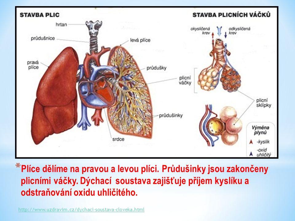 * Plíce dělíme na pravou a levou plíci. Průdušinky jsou zakončeny plicními váčky.