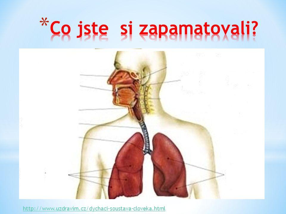 http://www.uzdravim.cz/dychaci-soustava-cloveka.html