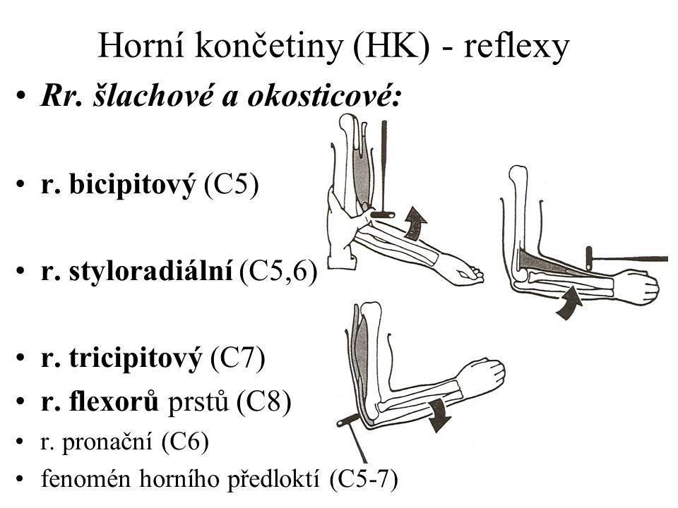 Horní končetiny (HK) - reflexy Rr. šlachové a okosticové: r. bicipitový (C5) r. styloradiální (C5,6) r. tricipitový (C7) r. flexorů prstů (C8) r. pron