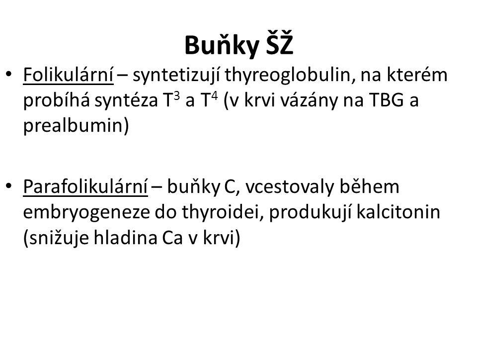 Buňky ŠŽ Folikulární – syntetizují thyreoglobulin, na kterém probíhá syntéza T 3 a T 4 (v krvi vázány na TBG a prealbumin) Parafolikulární – buňky C, vcestovaly během embryogeneze do thyroidei, produkují kalcitonin (snižuje hladina Ca v krvi)