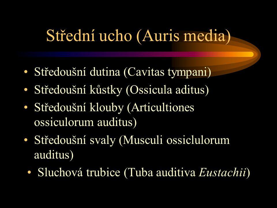 Střední ucho (Auris media) Středoušní dutina (Cavitas tympani) Středoušní kůstky (Ossicula aditus) Středoušní klouby (Articultiones ossiculorum auditu