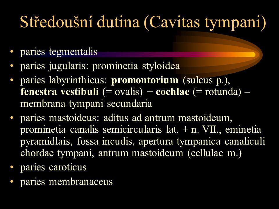 Středoušní dutina (Cavitas tympani) paries tegmentalis paries jugularis: prominetia styloidea paries labyrinthicus: promontorium (sulcus p.), fenestra