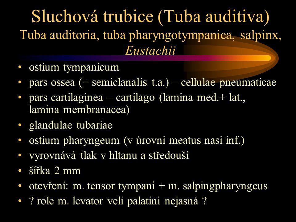 Sluchová trubice (Tuba auditiva) Tuba auditoria, tuba pharyngotympanica, salpinx, Eustachii ostium tympanicum pars ossea (= semiclanalis t.a.) – cellu