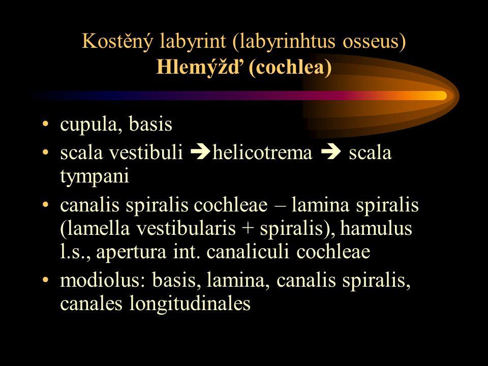 Kostěný labyrint (labyrinhtus osseus) Hlemýžď (cochlea) cupula, basis scala vestibuli  helicotrema  scala tympani canalis spiralis cochleae – lamina