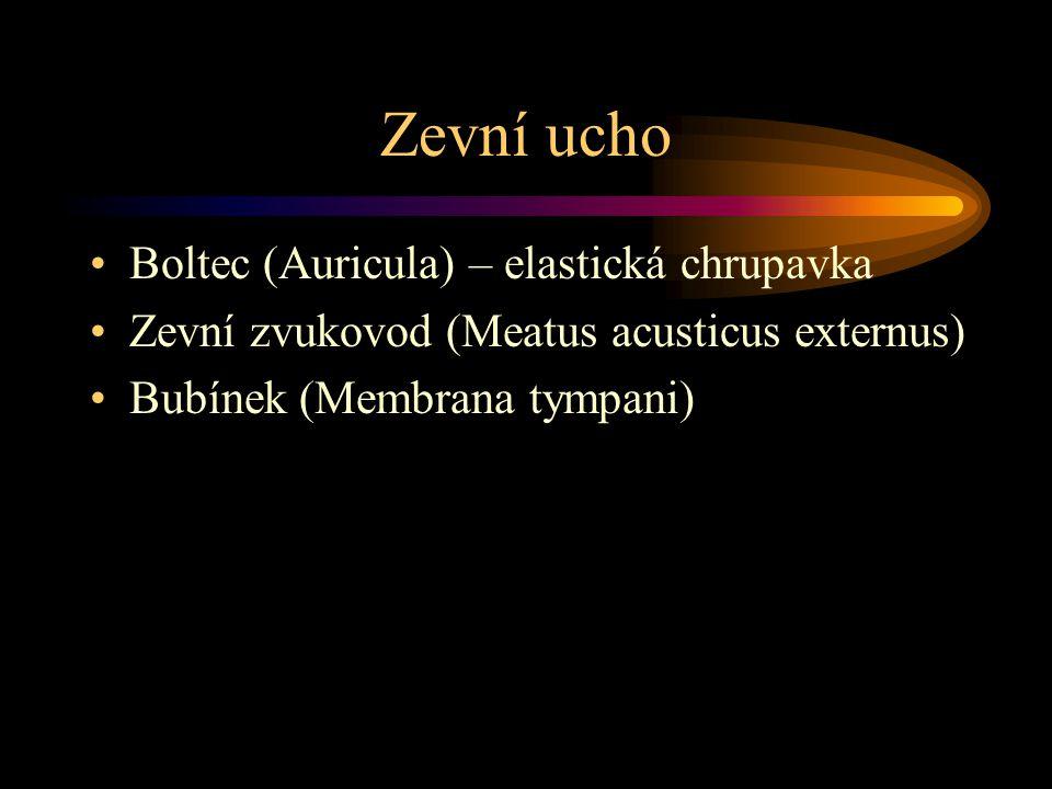 Zevní ucho Boltec (Auricula) – elastická chrupavka Zevní zvukovod (Meatus acusticus externus) Bubínek (Membrana tympani)