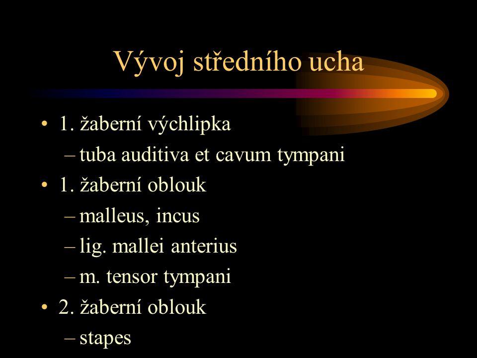 Vývoj středního ucha 1. žaberní výchlipka –tuba auditiva et cavum tympani 1. žaberní oblouk –malleus, incus –lig. mallei anterius –m. tensor tympani 2
