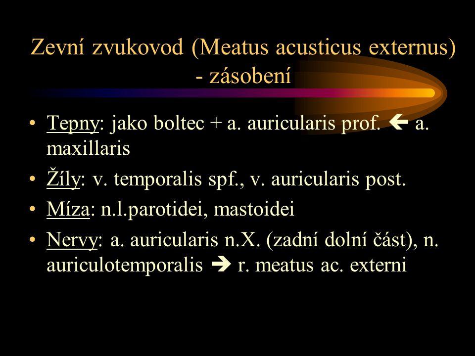 Bubínek (membrana tympani) Sulcus tympanicus, incisura tympanica Rivini 9x10 mm, tloušťka 0,1 mm Anulus fribrocartilagineus Otoskopie: umbo m.t., stria mallearis, prominetia mallearis, plica mallearis ant.+post., trigonum Woodi (= světelný reflex) Pars flaccida Shrapnelli, pars tensa Deklinace (50º sagitálně), inklinace (45 º transverzálně) Paracentéza: dolní zadní kvadrant