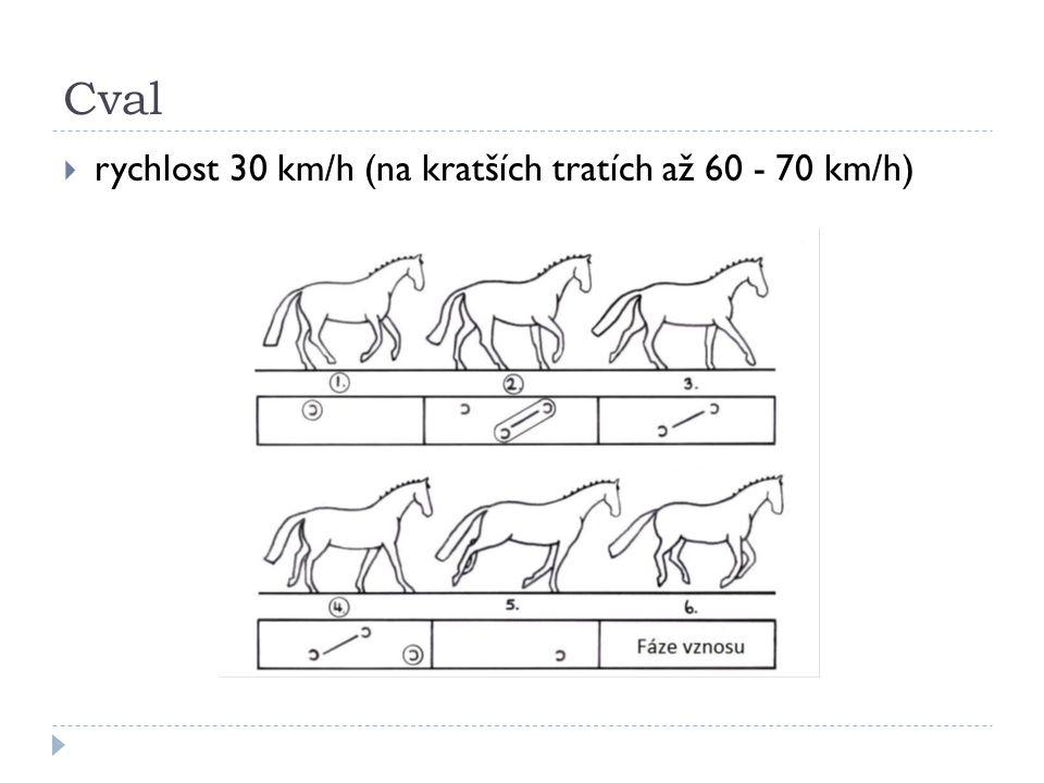 Cval  rychlost 30 km/h (na kratších tratích až 60 - 70 km/h)