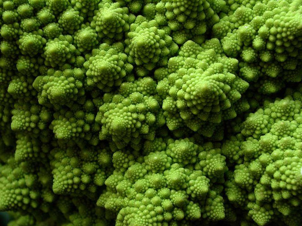 Fraktální brokolice