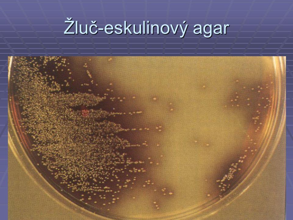 Žluč-eskulinový agar