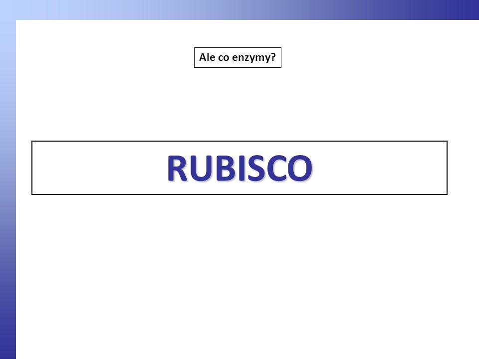 Ale co enzymy? RUBISCO
