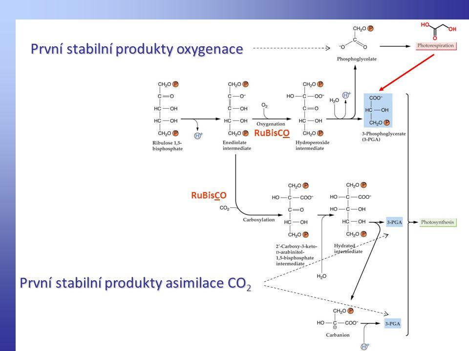První stabilní produkty asimilace CO 2 První stabilní produkty oxygenace RuBisCO
