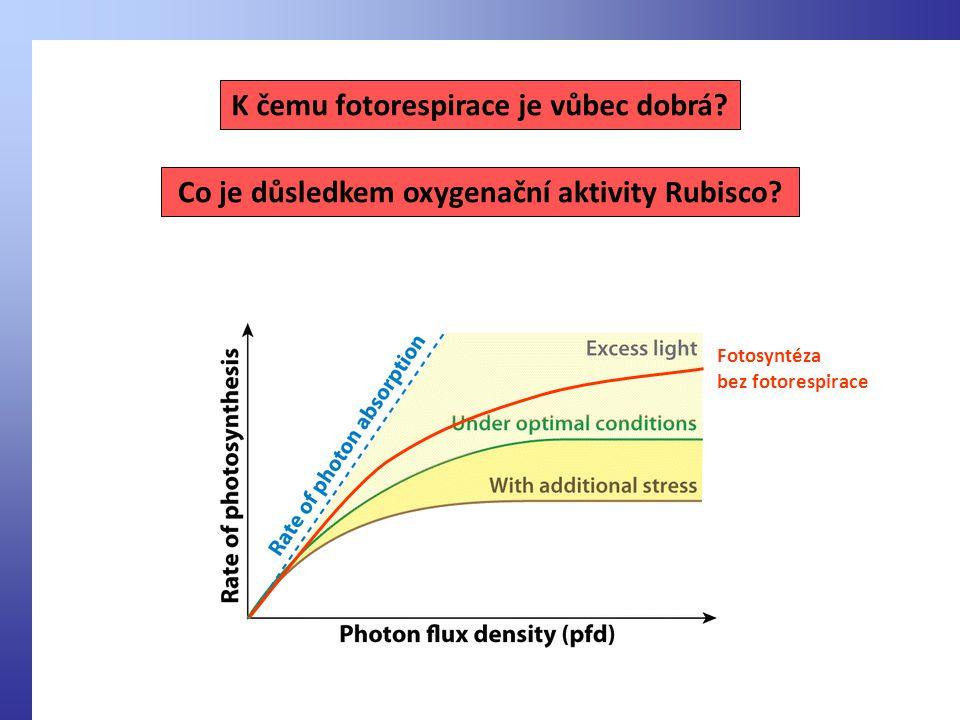 Co je důsledkem oxygenační aktivity Rubisco.K čemu fotorespirace je vůbec dobrá.