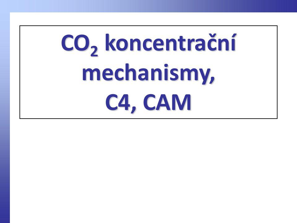 CO 2 koncentrační mechanismy, C4, CAM