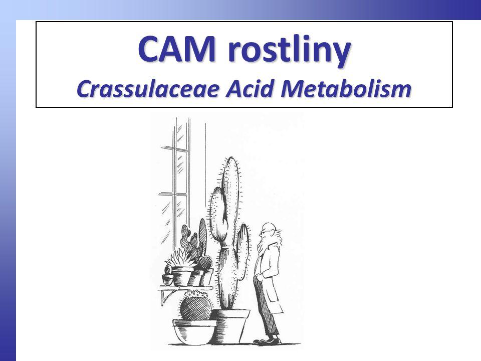 CAM rostliny Crassulaceae Acid Metabolism