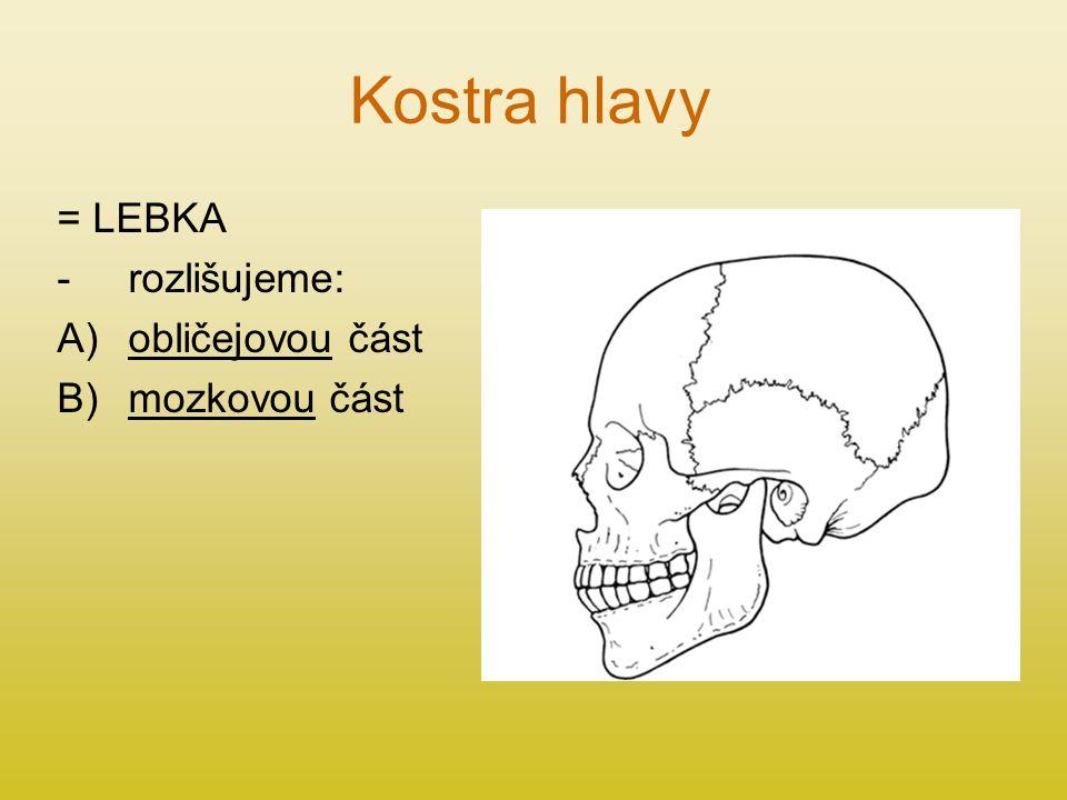 Kostra hlavy = LEBKA -rozlišujeme: A)obličejovou část B)mozkovou část