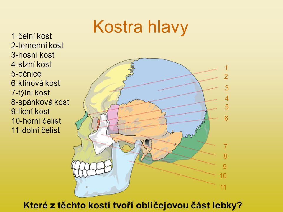 Kostra hlavy 1 2 3 4 5 6 7 8 9 11 10 1-čelní kost 2-temenní kost 3-nosní kost 4-slzní kost 5-očnice 6-klínová kost 7-týlní kost 8-spánková kost 9-lícní kost 10-horní čelist 11-dolní čelist Které z těchto kostí tvoří obličejovou část lebky?