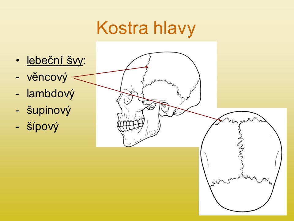 Kostra hlavy lebeční švy: -věncový -lambdový -šupinový -šípový