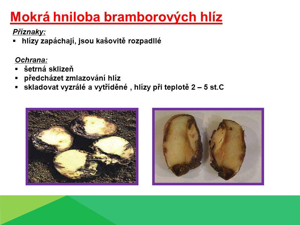 Mokrá hniloba bramborových hlíz Příznaky:  hlízy zapáchají, jsou kašovitě rozpadllé Ochrana:  šetrná sklizeň  předcházet zmlazování hlíz  skladova