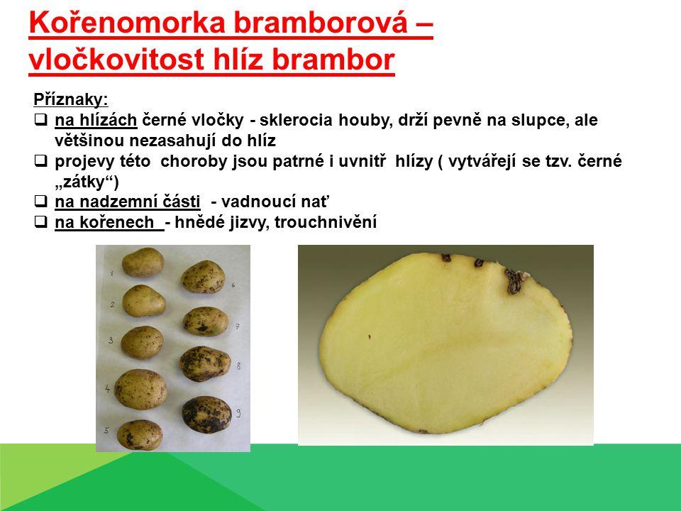Suchá hniloba (tlení) hlíz bramboru Příznaky:  hlízy bramboru po sklizni hnijí suchou hnilobou – scvrkávají se, slupka se propadá, objevují se i dutiny  v místě nekróz vatovité mycelium (bělavé, růžové, žlutavé) Příčina:  houby rodu Fusarium, Phoma, Alternaria Ochrana:  skladování suchých, nepoškozených hlíz  vhodný způsob skladování