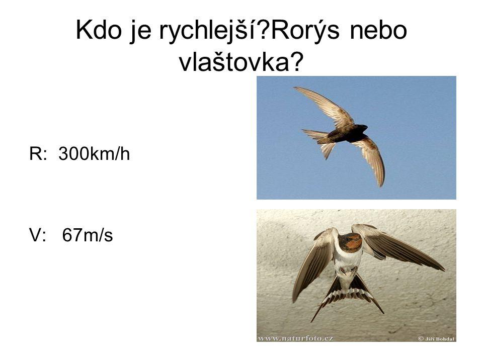 Kdo je rychlejší?Rorýs nebo vlaštovka? R: 300km/h V: 67m/s