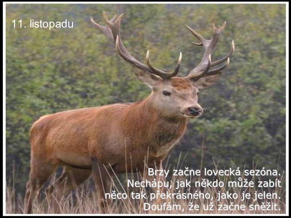 11.listopadu Brzy začne lovecká sezóna.