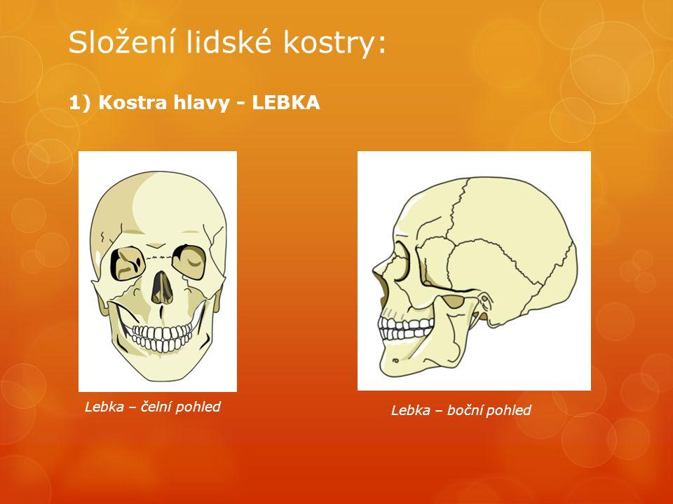 Složení lidské kostry: 1) Kostra hlavy - LEBKA Lebka – čelní pohled Lebka – boční pohled