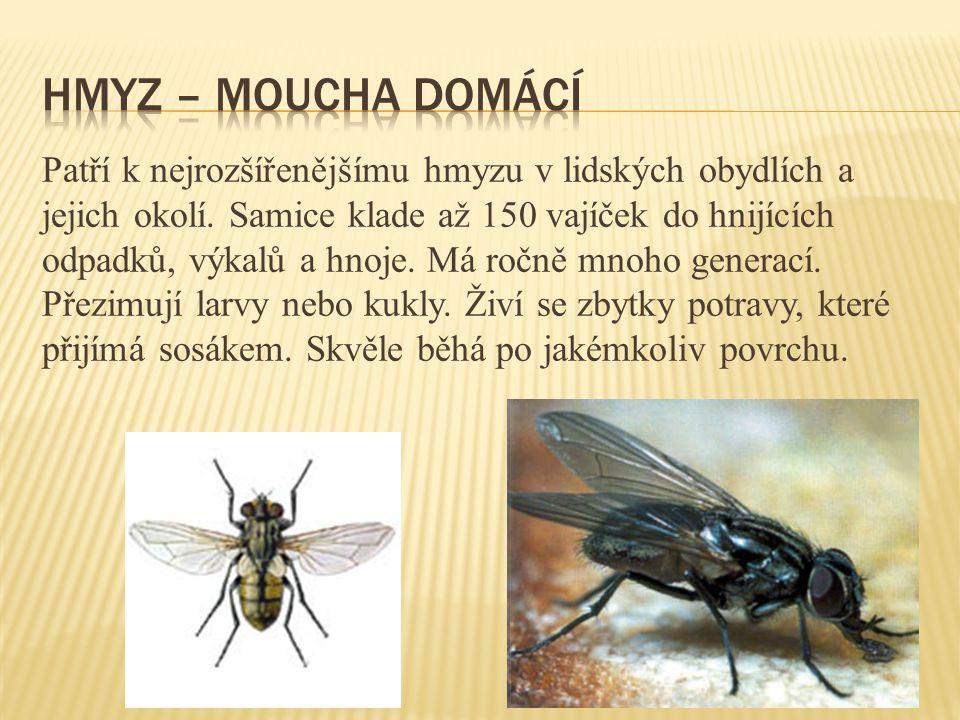 Patří k nejrozšířenějšímu hmyzu v lidských obydlích a jejich okolí. Samice klade až 150 vajíček do hnijících odpadků, výkalů a hnoje. Má ročně mnoho g