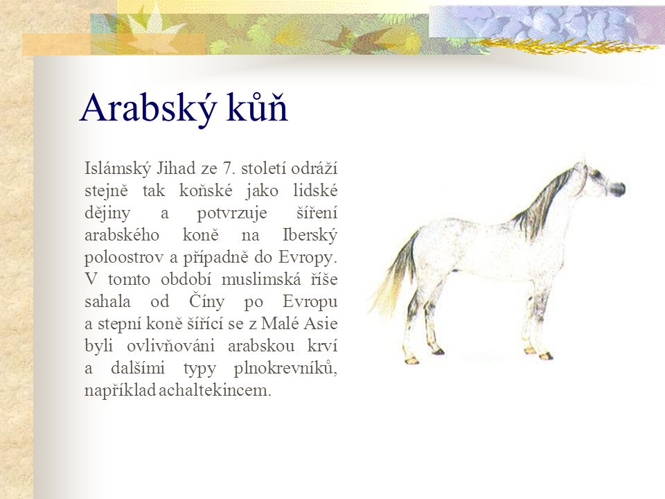 Evropská plemena a andaluský kůň Jen málokterá evropská plemena nejsou poznamenána andaluským koněm, jehož vliv se projevuje od lipických koní při španělské škole až po základy takových plemen, jako jsou fríský kůň a velšský kob.