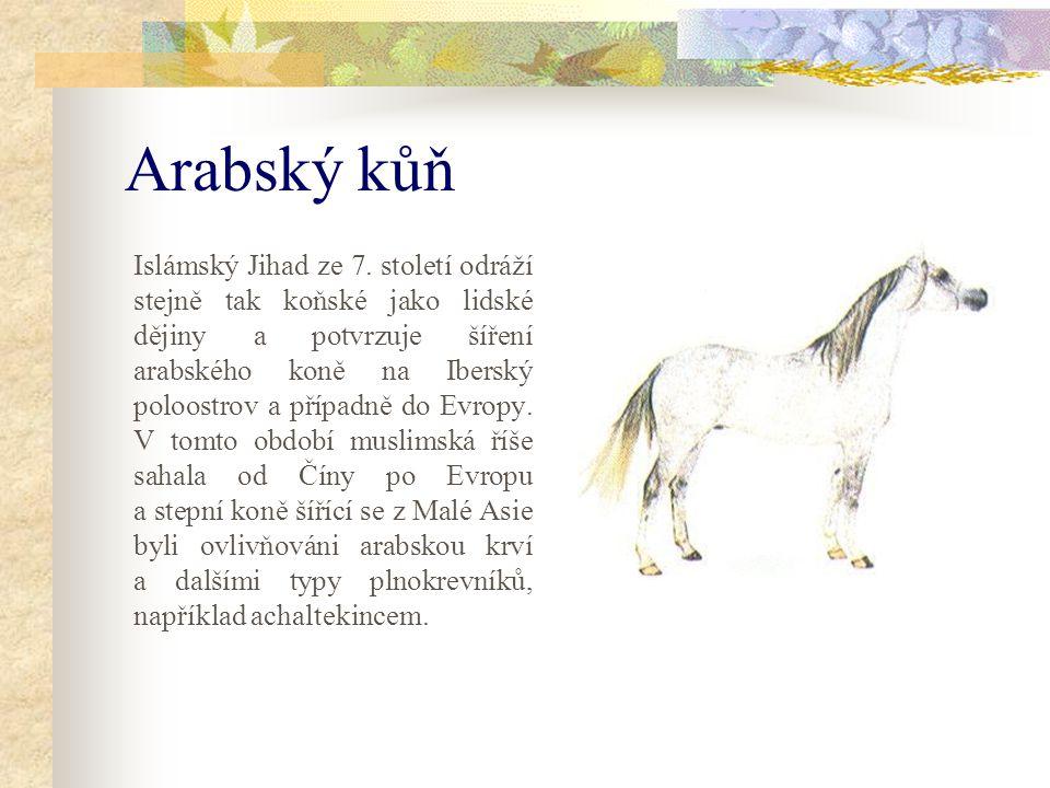 Arabský kůň Islámský Jihad ze 7.