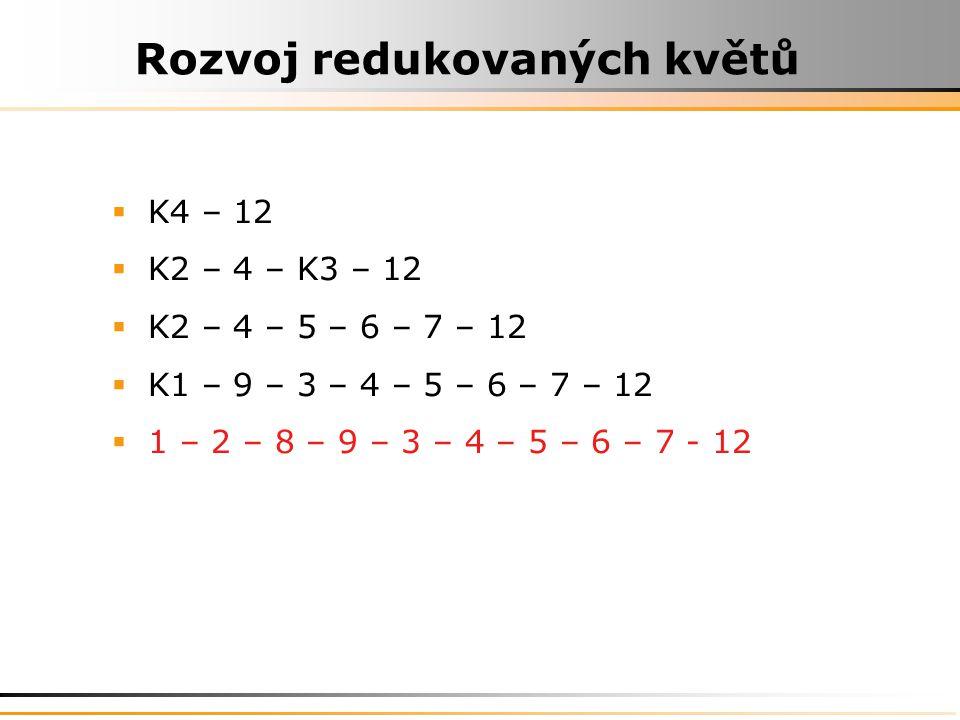 Rozvoj redukovaných květů  K4 – 12  K2 – 4 – K3 – 12  K2 – 4 – 5 – 6 – 7 – 12  K1 – 9 – 3 – 4 – 5 – 6 – 7 – 12  1 – 2 – 8 – 9 – 3 – 4 – 5 – 6 – 7 - 12