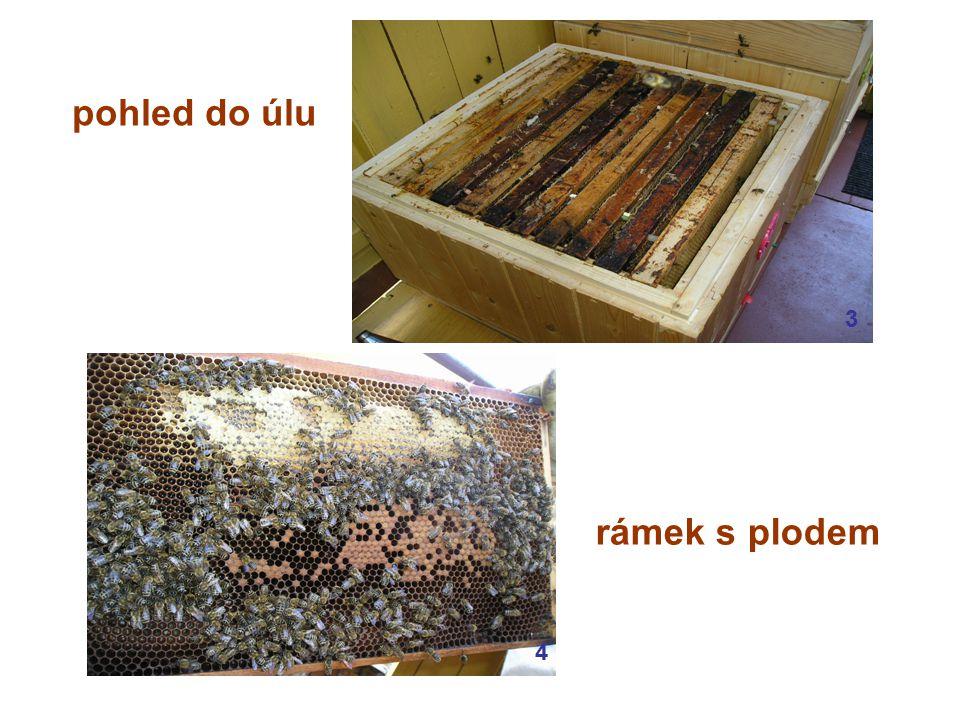 pohled do úlu rámek s plodem 34