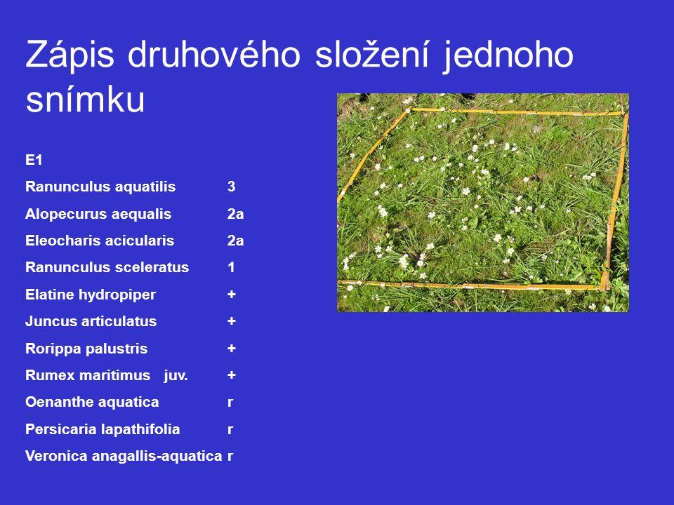 Zápis druhového složení jednoho snímku E1 Ranunculus aquatilis3 Alopecurus aequalis 2a Eleocharis acicularis2a Ranunculus sceleratus1 Elatine hydropiper+ Juncus articulatus+ Rorippa palustris+ Rumex maritimus juv.+ Oenanthe aquaticar Persicaria lapathifoliar Veronica anagallis-aquaticar