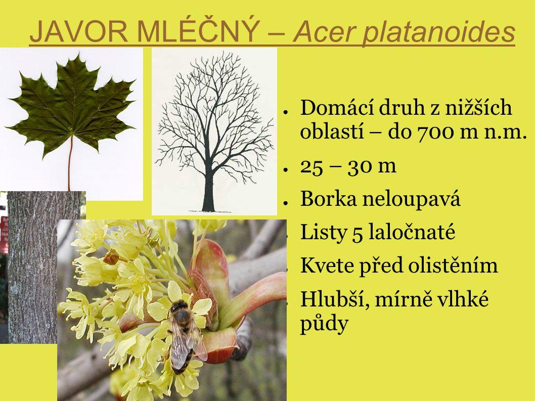 Kontrolní otázky ● Čím se odlišují nároky našich domácích javorů a jaké je jejich využití ● Jaký je včelařský význam javorů ( obecně ) - porovnejte jednotlivé druhy ● Kritéria při výběru druhu javorů