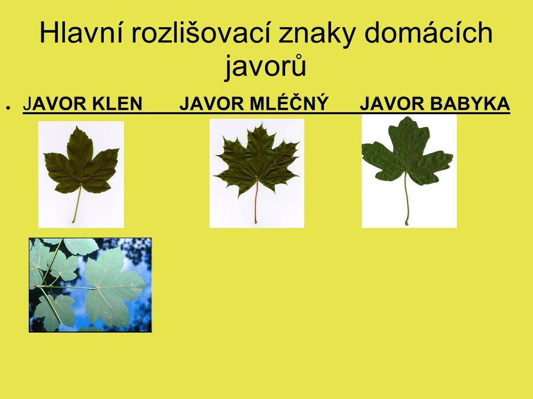 Hlavní rozlišovací znaky domácích javorů ● JAVOR KLEN JAVOR MLÉČNÝ JAVOR BABYKA