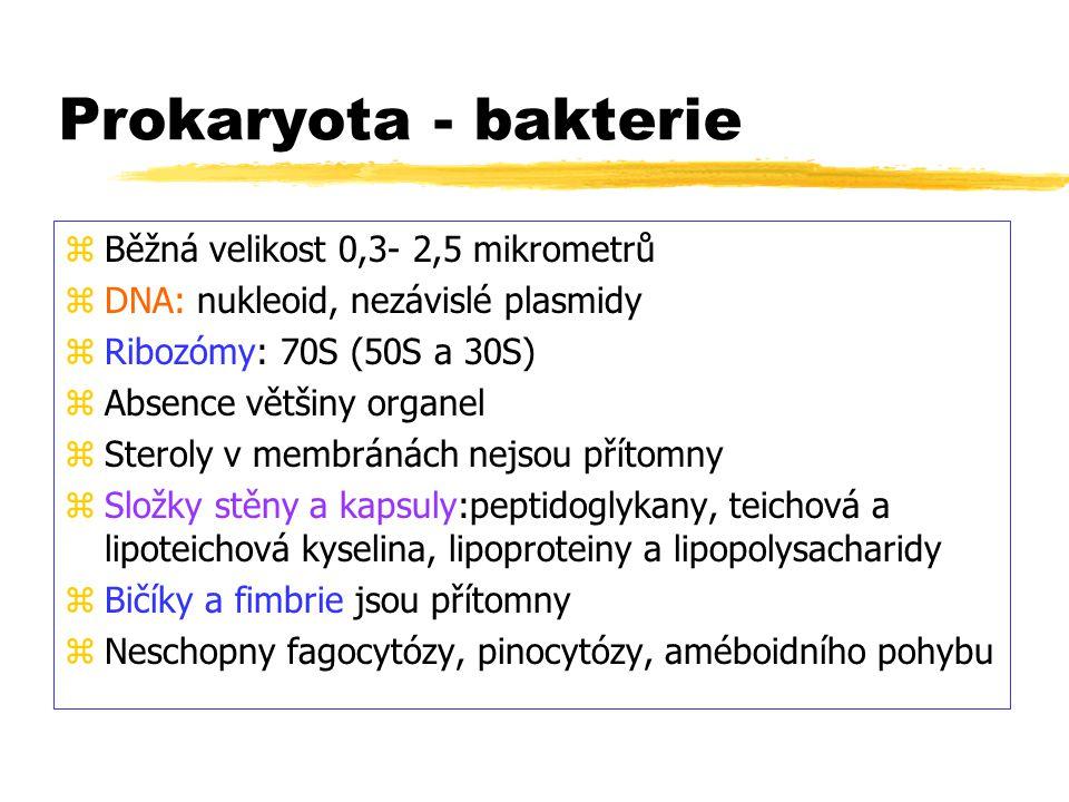 Prokaryota - bakterie zBěžná velikost 0,3- 2,5 mikrometrů zDNA: nukleoid, nezávislé plasmidy zRibozómy: 70S (50S a 30S) zAbsence většiny organel zSter