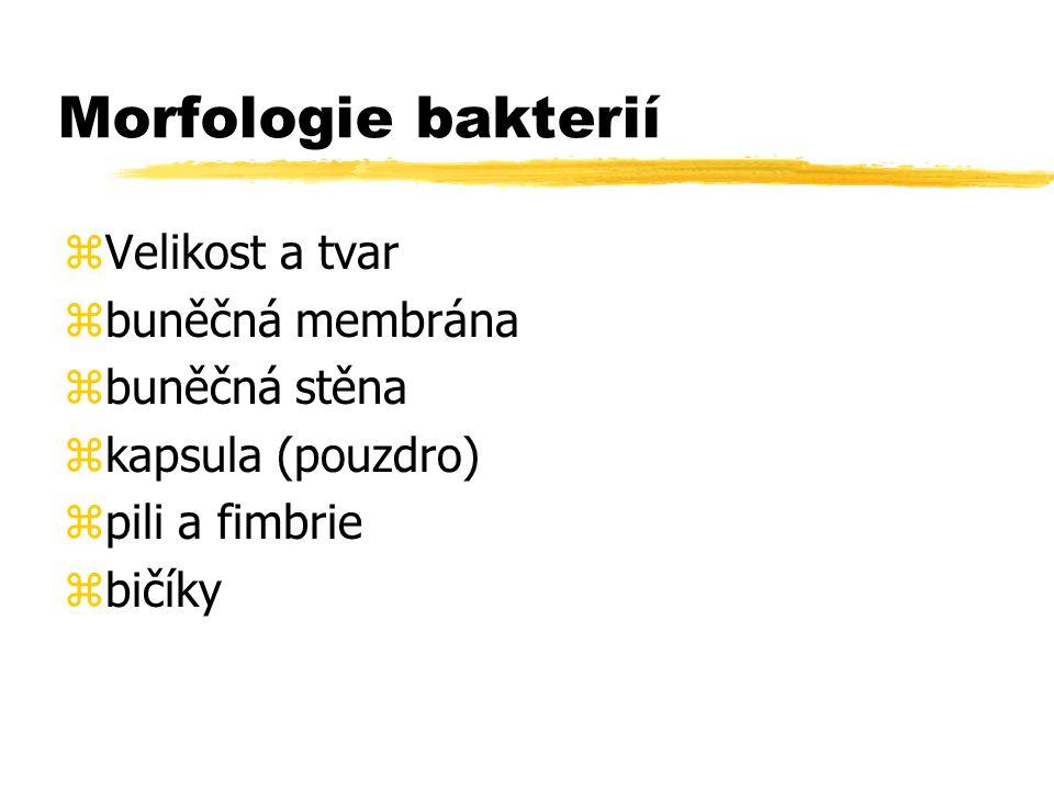 Morfologie bakterií zVelikost a tvar zbuněčná membrána zbuněčná stěna zkapsula (pouzdro) zpili a fimbrie zbičíky