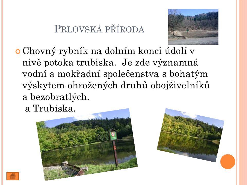 P RLOVSKÁ PŘÍRODA Chovný rybník na dolním konci údolí v nivě potoka trubiska.